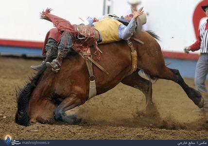 مسابقات رام کردن اسبهای وحشی در آمریکا