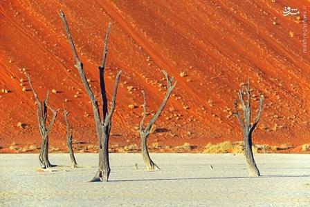صحرای خارشتر در نامبیا