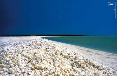 آب این ساحل در استرالیا بسیار شور است و این باعث شده این صدف ها که بدون کنترل تکثیر میشوند توسط شکارچیان طبیعی خودشون بسیار شکار میشوند و فراوانی این نرم تنان باعث شده سواحل با صدف آنها پر شود.