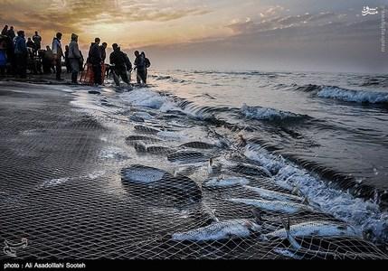 resized 791787 928 صید صبحگاهی در سواحل گیلان