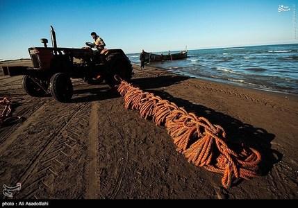 resized 791788 697 صید صبحگاهی در سواحل گیلان
