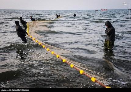 resized 791789 246 صید صبحگاهی در سواحل گیلان