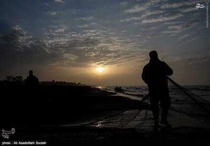 resized 791793 824 صید صبحگاهی در سواحل گیلان