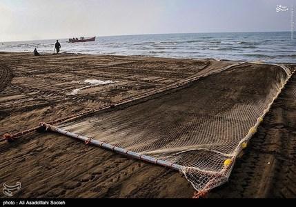 resized 791794 779 صید صبحگاهی در سواحل گیلان