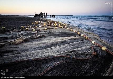 resized 791796 841 صید صبحگاهی در سواحل گیلان