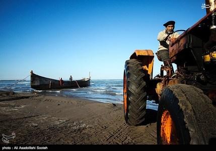 resized 791798 524 صید صبحگاهی در سواحل گیلان