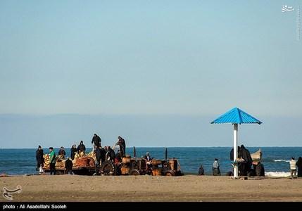 resized 791799 156 صید صبحگاهی در سواحل گیلان