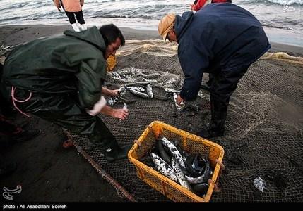 resized 791800 591 صید صبحگاهی در سواحل گیلان