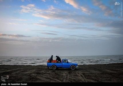 resized 791805 304 صید صبحگاهی در سواحل گیلان