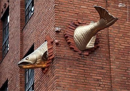 اورگان – آمریکا؛ ماهی قزل آلا