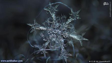 فرمی که اغلب تولید میشود کریستالهایی با شاخههای متعدد هستند. این نوع کریستال از همه فرمها شناختهشدهتر است. اما کریستالها زمانی به دانههای برف تبدیل میشوند که زیاد باشند؛ یعنی زمانی که چند کریستالبا هم ترکیب شوند.