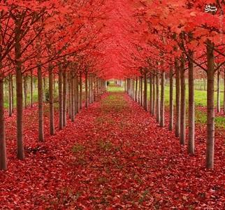 تونل درختان اَفرا، ارگون