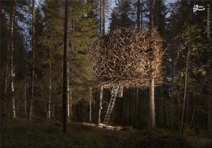 سوئد: لانه پرنده یک هتل در طبیعت است.
