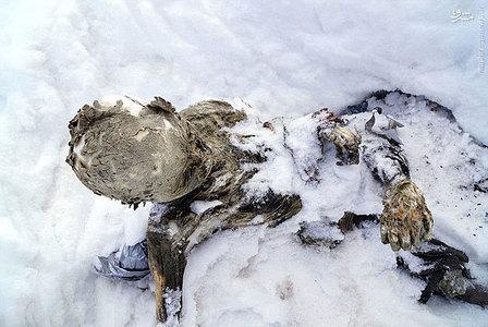 resized 934880 547 کشف مومیایی ۵۵ ساله در مکزیک