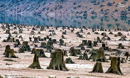 این عکس از ?دنیل دنسر? جنگلی را به تصویر کشیده که در جهت توسعه منبع آبی سد نابود شده است.  تا زمانی که همه انسان?ها به درک عمیقی از اهمیت درختان و جنگل?ها در حیات بشریت دست یابند راهی طولانی پیش رو است. جنگل?ها بهترین همراه انسان در مسیر پیش رو به سوی آینده?ای مبهم?اند.