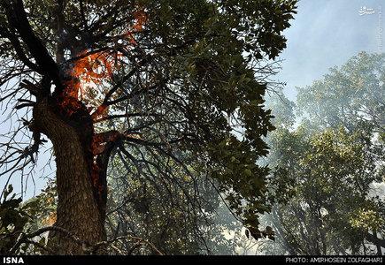 آتش سوزی جنگل ومراتع تپه مورمیخی  ودالبرا درمنطقه آب حیات  سرفاریاب همچنان ادامه دارد.