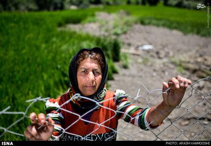 معصومه مرادی ساکن روستای شیرکلا در منطقه سواد کوه