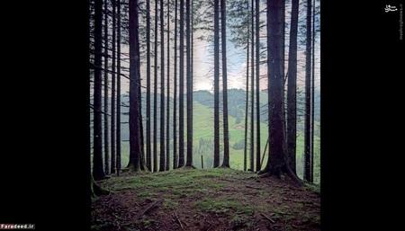 آلمان، اتریش (2012) - «یونگ هُلتس» نام روستایی در اتریش است که اطراف آن مرز آلمان بوده و تنها از یک جهت به خاک اتریش متصل است. در این عکس، منظره جلو متعلق به خاک آلمان و منظره پشت نیز متعلق به خاک اتریش است.