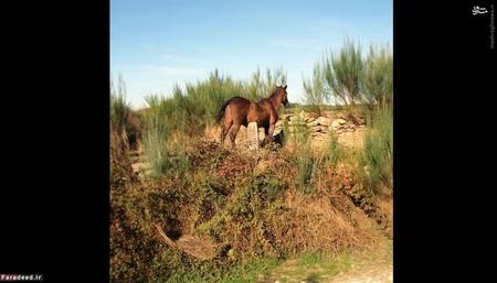 مرز پرتغال و اسپانیا، در نزدیکی سوتِلینو دا رایا (2010) -  مرزهای پرتغال از قرن 13 تاکنون کمتر دستخوش تغییر شده است. البته منازعه بر سر دو شهر «اُلیبِنسا» و «ایسلاس سالبِخاس» بین این دو کشور وجود داشته است