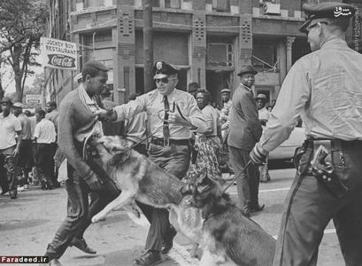 سگ پلیس آمریکا به یکی از تظاهراتکنندگان جنبش حقوق مدنی در 3 می 1963 حمله کرده است که در بیرمنگام به مخالفت با حکم ممنوعیت راهپیمایی پرداختند؛ این عکس فردای آن روز در صفحه اول روزنامه نیویورکتایمز منتشر شد و جان افکندی، رئیس جمهور وقت آمریکا را وادار به موضع گیری کرد.