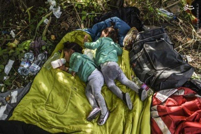 کودکان مهاجر در مرز مجارستان (AFP)