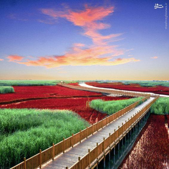منظره زیبای تالاب قرمز در استان «لیائونینگ» چین