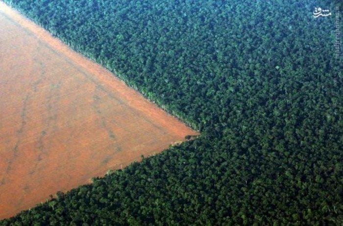 جنگل های آمازون و زمین های محل کشت سویا در برزیل