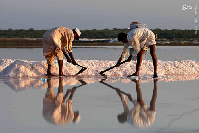 جمع آوری نمک دریا در پاکستان