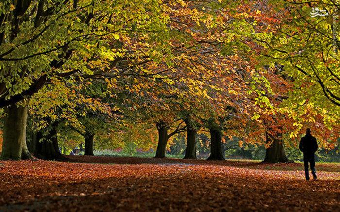 طبیعت رنگین پاییزی