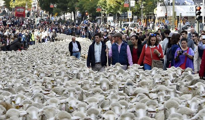 جشنواره دفاع از حقوق چوپانان در مادرید برگزار شد