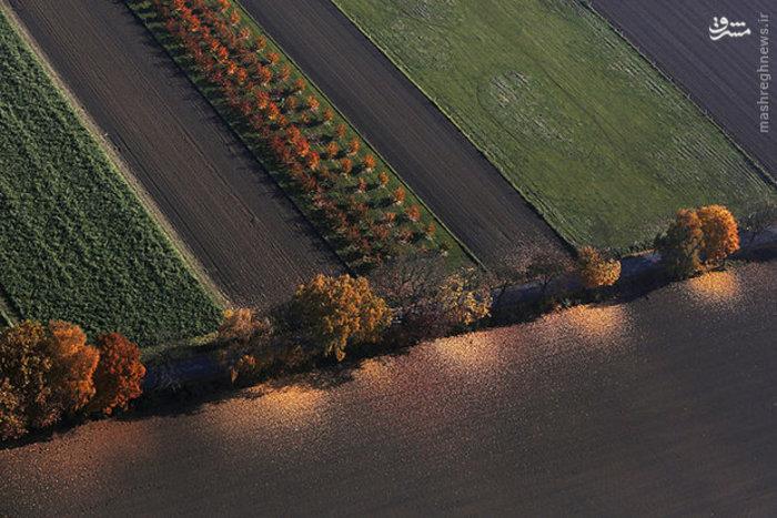 عکس هوایی از برگ ریزان پاییزی