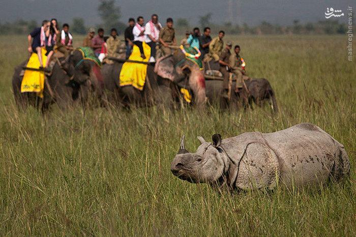 گردشگران در پناهگاه حیات وحش هند