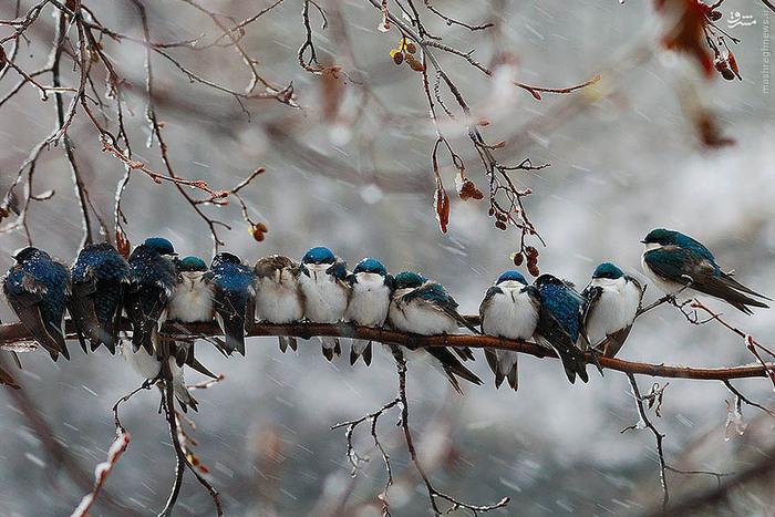 عکس/ راهکار پرندگان برای گرم شدن