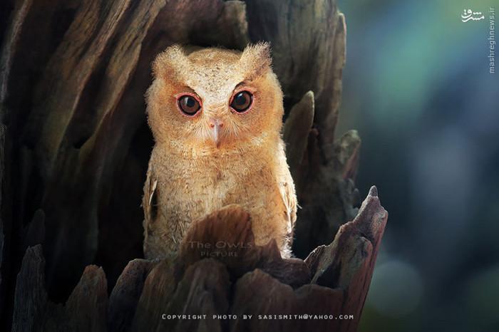 عکس طبیعت عکس زیبا عکس حیوانات حیوان زیبا