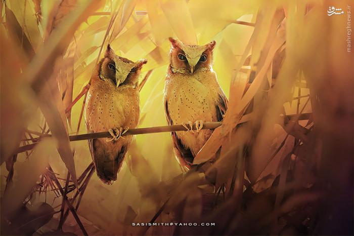 عکس های زیبا عکس طبیعت عکس حیوانات حیوانات زیبا و دوست داشتنی