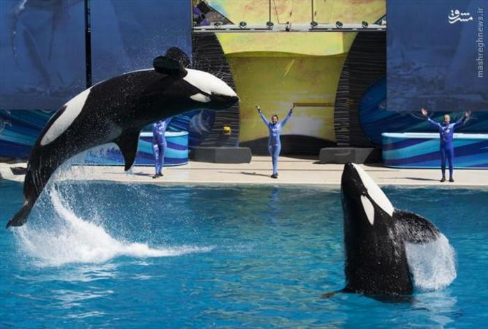 عکس قلب نهنگ