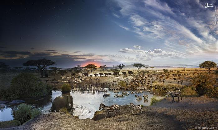 پارک ملی تانزانیا