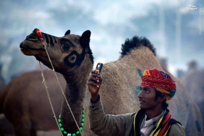 تصویر یک شتربان در راجستان هند