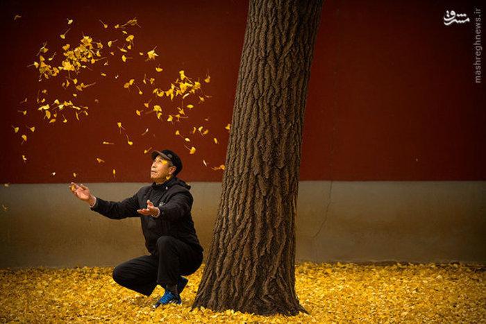 یک مرد چینی در پارکی در پکن