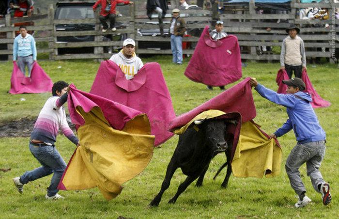 جشنواره گاوبازی در اکوادور
