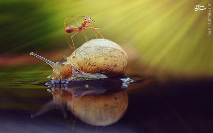 عکاسی با لنز پیشرفته ماکرو از مورچه و حلزون