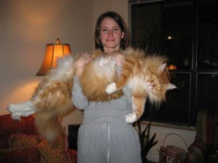 بزرگترین گربه دنیا