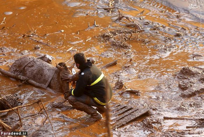 امدادرسان در حال نوازش صورت یک اسب پس از شکست سد ضایعات در برزیل. 6 نوامبر 2015
