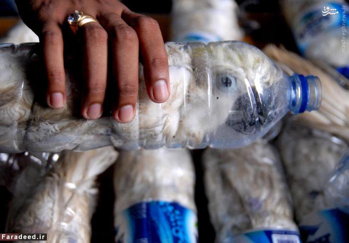 قاچاق 20 طوطی تاج طلایی، گونه در حال انقراض در بطری های آب در اندونزی. 5 می 2015