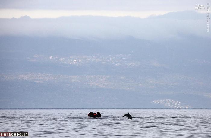 جست و خیز دلفین در مقابل یک قایق حمل مهاجرین سوری دریای اژه ترکیه، نزدیکی