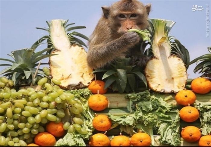 عکس/ ضیافت میمون ها در تایلند