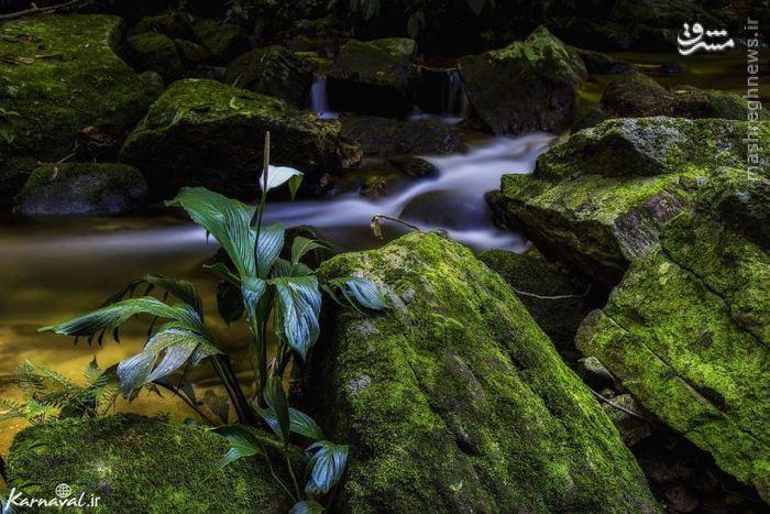 باغ گیاهشناسی ریو | Jardim Botânico باغی ۱۳۷ هکتاری با بیش از ۸۰۰۰ گونه گیاه است. از بخشهای قابل توجه این باغ وجود ردیفی از درختان خرما، قسمت آمازون باغ، دریاچهای با نیلوفرهای آبی و عظیم آمازونی و در نهایت بخش سرپوشیده ارکیداریوم است که در آن ۶۰۰ گونه ارکیده پروش داده میشود.