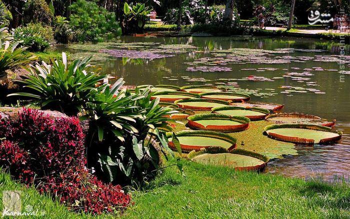 پارکو لاگه | Parque Lage بوستانی عمومی، زیبا و چشمگیر است که در ۱ کیلومتری باغ گیاهشناسی ریو قرار دارد. در این بوستان دریاچههای کوچک و یک عمارت بزرگ نیز به چشم میخورد.