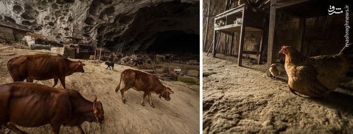 روستای درون غار,روستای ژونگدونگ,عکس روستای ژونگدونگ,روستای عجیب در چین,روستای بدون خورشید