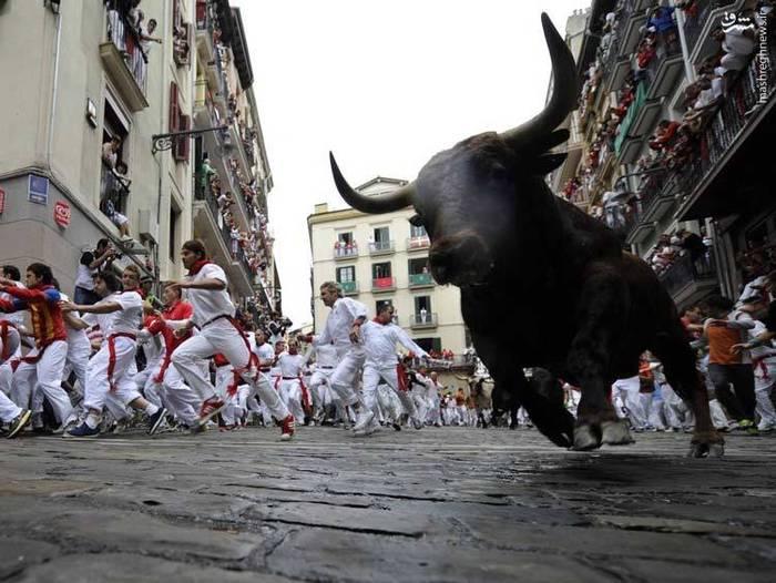 دویدن با گاوهای نر در پامپلونا، اسپانیا